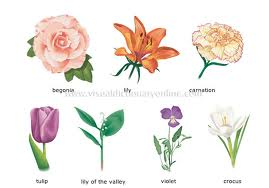 Learn Flower Names In Mandarin Chinese How To Say I Like Peach Blossoms Cherry And Le Parts Of A Plant